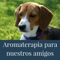 aromaterapia-animales-mascotas